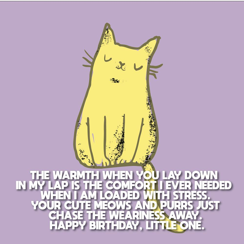 Cute Birthday Wishes For Cats With Images